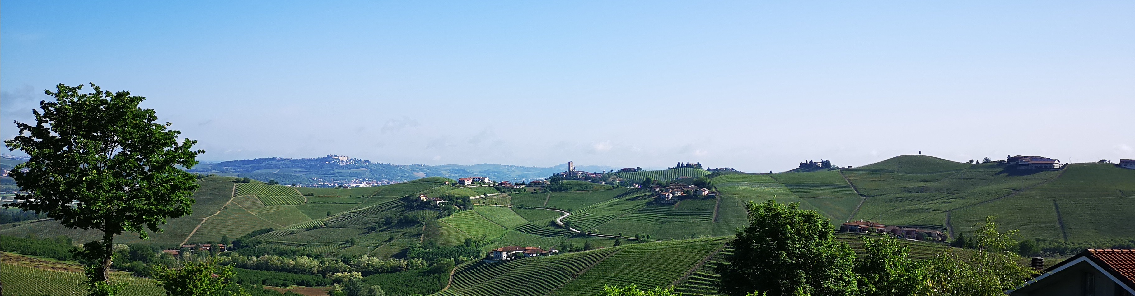 Vineyards of Barbaresco